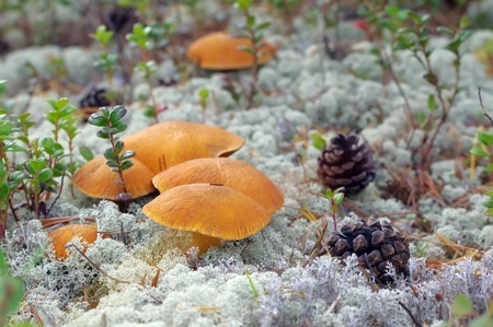 Mushrooms. Family of fungi growing on moss Stock Photo - 9059032