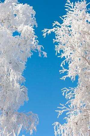 Cumbres heladas de los �rboles en forma de cortina Foto de archivo - 9050413