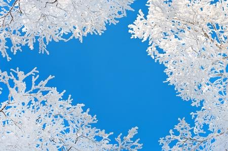 Bäume im Raureif. Frost Wipfel der Bäume in Form der Vorhang