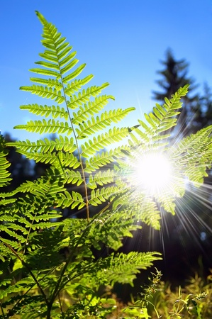 unravel: Fern against the blue sky