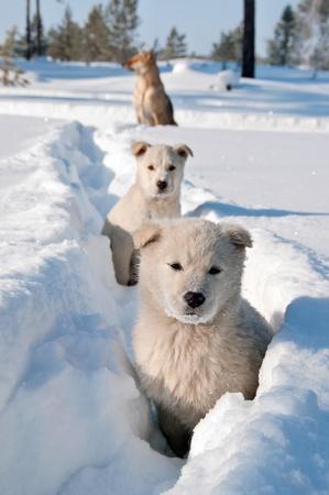 Stray dogs. Stray dogs family in the Siberian taiga