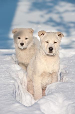 taiga: Deux petits chiens errants. Stray famille chiens dans la ta�ga sib�rienne Banque d'images