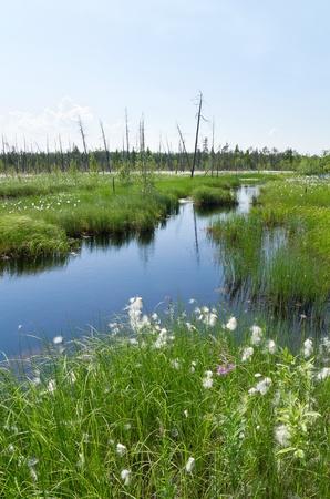 Impassable swamp in Western Siberia, photo