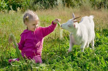 A little girl feeding a goat corn Stock Photo