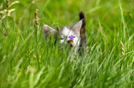 Little kitty for a walk in the tall grass