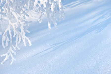 rime frost: Winter background. Stock Photo
