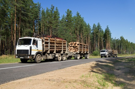Two cars loaded with wood going down hill