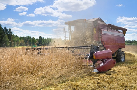 threshing: Harvest time. Harvester operates in the rye field