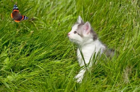 Kitten watching a butterfly. Little curious hunter