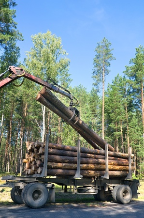 logging: Loading felled trees in the timber crane.