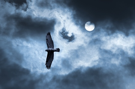 The bird of prey soaring in the stormy sky