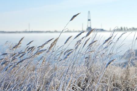 Reed bei Frost mit einem Bohrturm im Hintergrund. Der erste Frost in Sibirien am Ende Oktober. Lizenzfreie Bilder