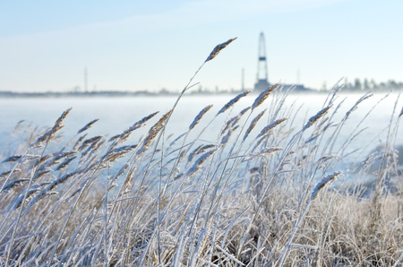 Reed in frost with a drilling derrick in the background. The first frost in Siberia at the end of October. Stock Photo