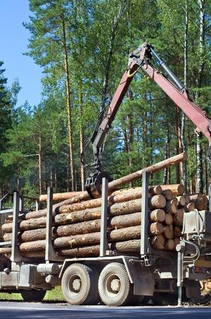 deforestacion: El envío de la madera. Carga de los árboles talados en la grúa de madera.