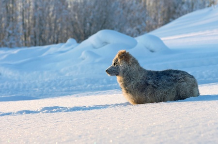 The puppy of a vagrant dog looks in a distance Stock Photo - 12185170