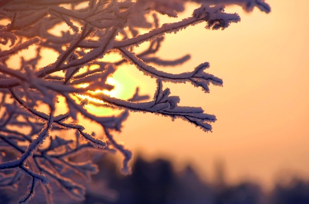Branch in hoarfrost in the frosty winter evening
