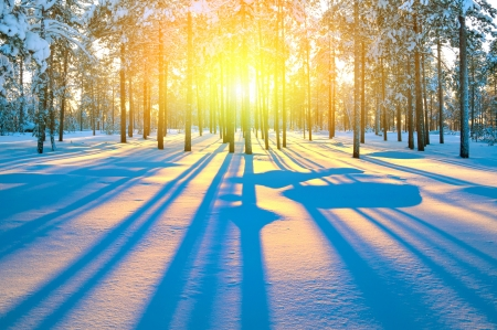 snowscape: Sunset in winter forest Stock Photo