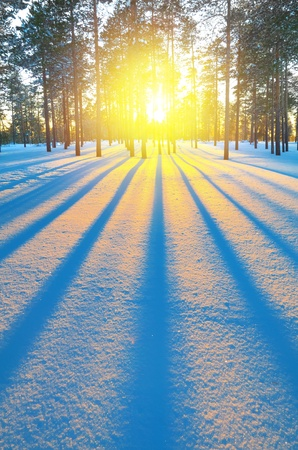 snowscape: The picturesque winter sunset in the forest Stock Photo