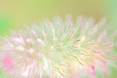 Abstract background from a field flower photo