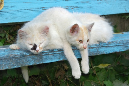 Two stray cats resting on the bench photo