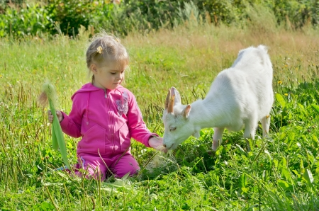 A little girl feeding a goat corn photo
