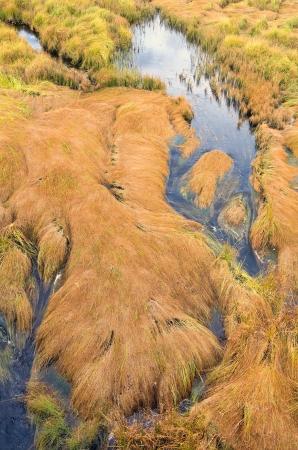 lying in grass: Paisaje de oto�o. Mentir hierba en un pantano. Foto de archivo