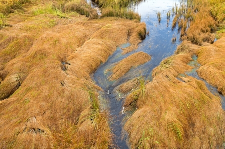 Autumn landscape. Lying grass on a bog. Stock Photo - 15230153