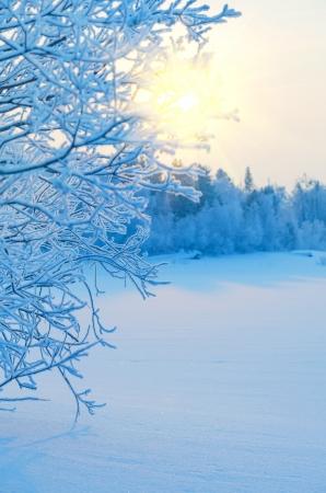 in winter: Paesaggio invernale Archivio Fotografico