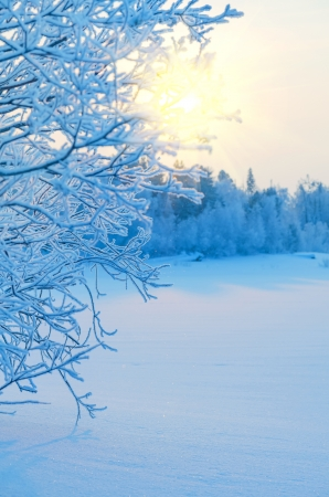 Winter Landscape Stock Photo - 15516843