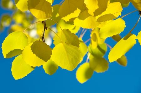 Autumn leaves against the blue sky photo