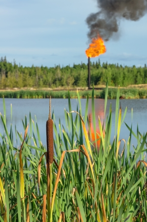 Cattail torch to the oil in the background. Pollution. photo