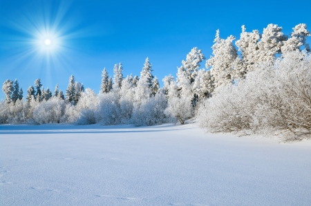 hoar: Winter Landscape