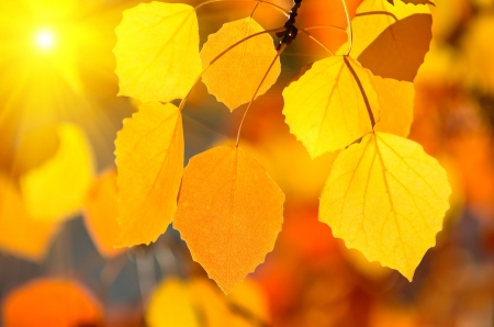 Background of autumn leaves. photo