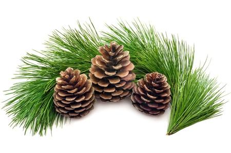 pomme de pin: Trois cônes avec des branches vertes sur un fond blanc