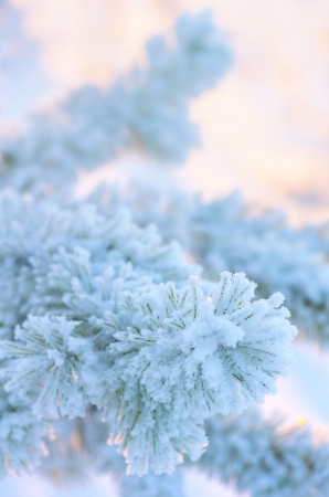 frost covered: Gentle winter background Stock Photo
