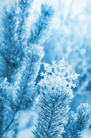 Winter background with decorative snowflake on the tree photo