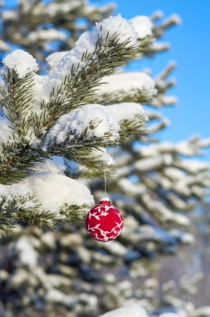 Red Christmas ball on a snow-covered tree branch photo