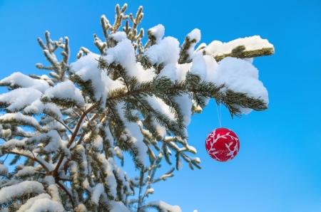 Red Christmas Ball auf einem schneebedeckten Ast