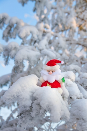Santa Claus sits on a snow-covered Christmas tree branch  photo