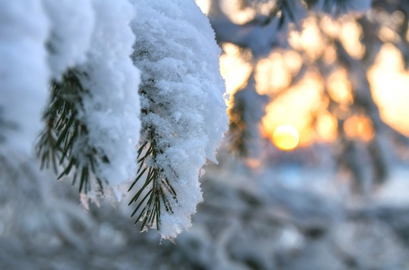 Snow-covered tree branch at sunset photo