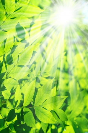 Background of fresh leaves with sunlight photo