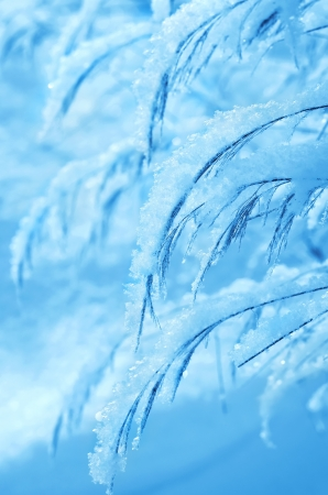 Winter Dream  Grass covered with snow Stock Photo - 16882570