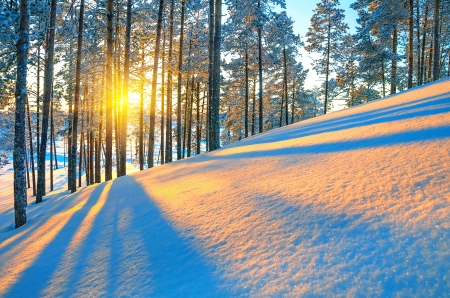 Sunset in winter forest Stock Photo - 16917440