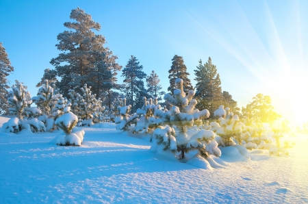 Winter Landscape Stock Photo - 16929933