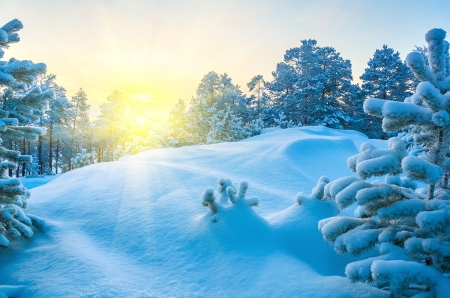 Winterlandschap Stockfoto - 16948882