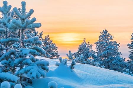 美しい冬の夜明けをバック グラウンドでのフォーカス 写真素材