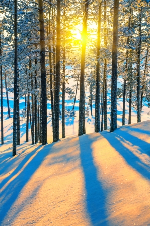 Colorful sunset in a winter forest photo