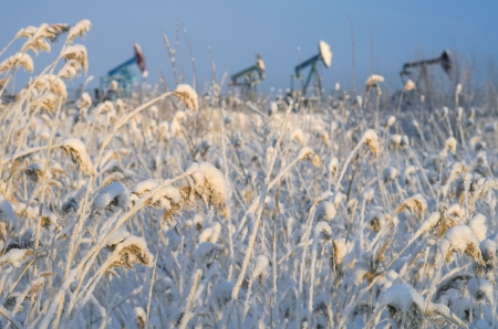 Snowy cane with oil pumps in the background  Sunset  photo