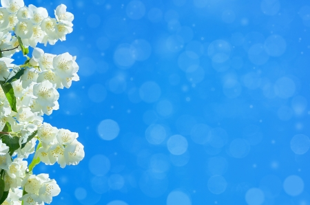 Blooming jasmine in the sky photo