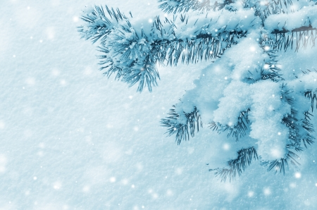 Background with snow-covered pine branch photo